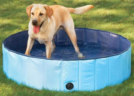 Delifur Foldable Cat And Dog Pool