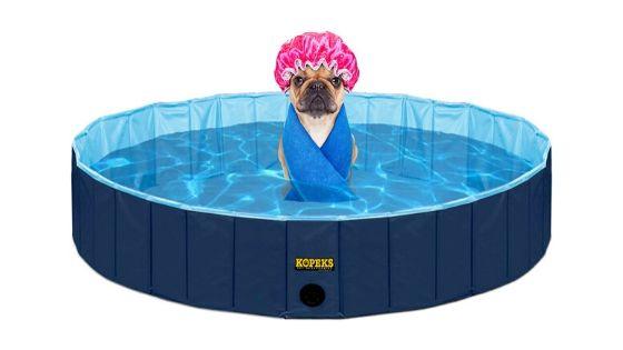Top 15 Dog Pools