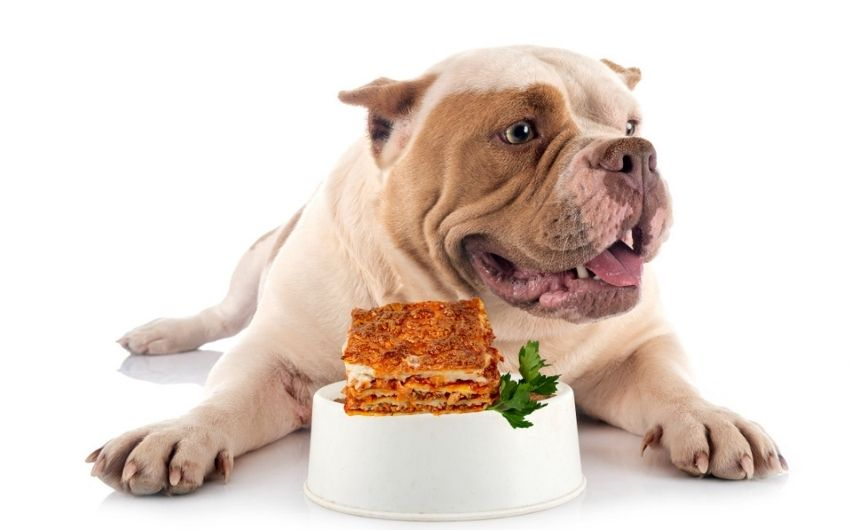 Can Dogs Eat Lasagna