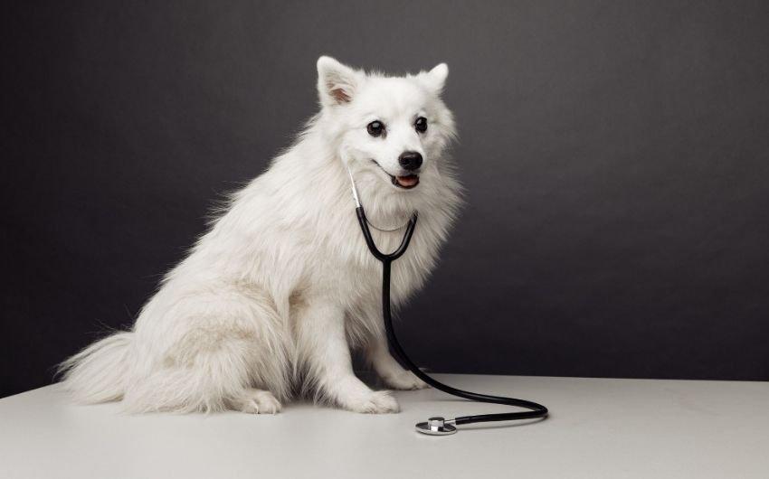 Can Dogs Take Phenergan